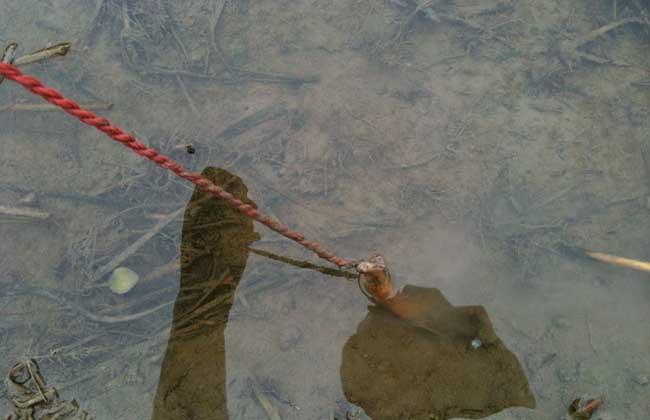 钓黄鳝有什么技巧