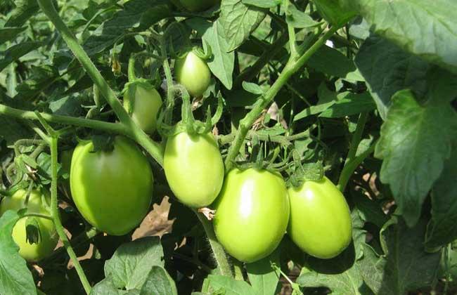 腐植酸肥料的作用和用法