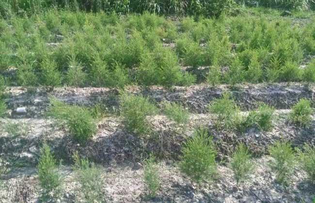 腐植酸肥料