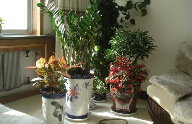 家庭种植花卉技术