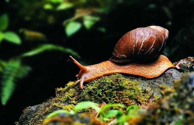 僵尸蜗牛真的存在吗?