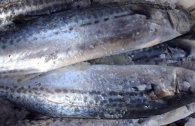 马鲛鱼的营养价值