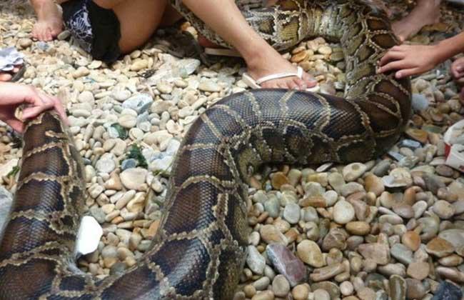 梦到蟒蛇是什么意思