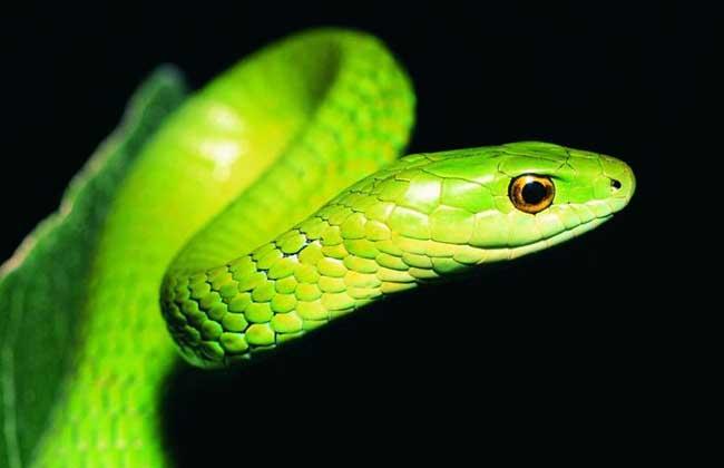 做梦梦见蛇_农村文化 周公解梦 > 正文  11,梦见黑蟒蛇,做梦梦见黑蟒蛇多是不好的