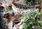 梦到蟒蛇是什么意思?