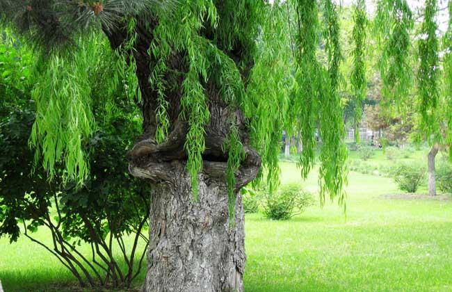 食人树真的会吃人吗