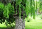 食人树真的会吃人吗?