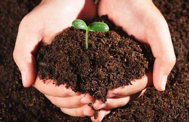 微生物肥料的作用