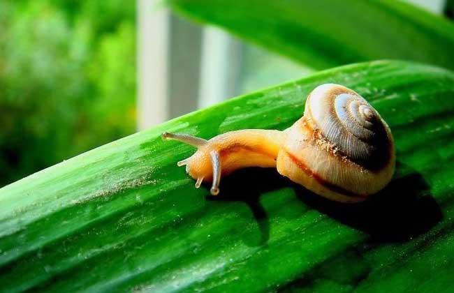 蜗牛是不是昆虫?