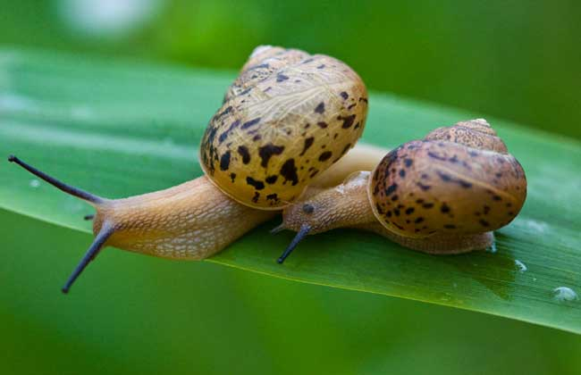 蜗牛是不是昆虫