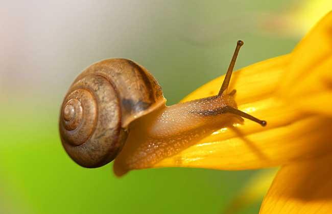 蜗牛有没有毒?