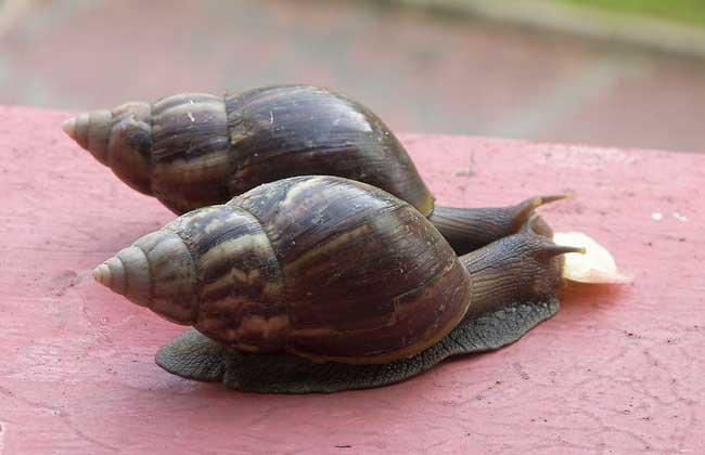 蜗牛有多少颗牙齿