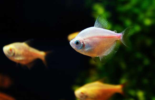 养鱼的水有什么要求?