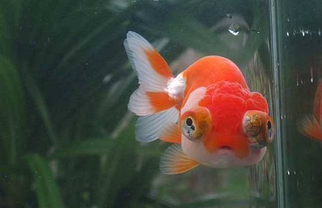 养鱼的水有什么要求