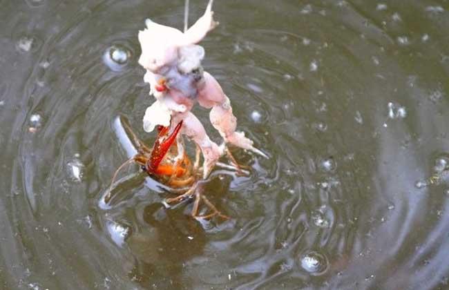 怎么钓龙虾最快