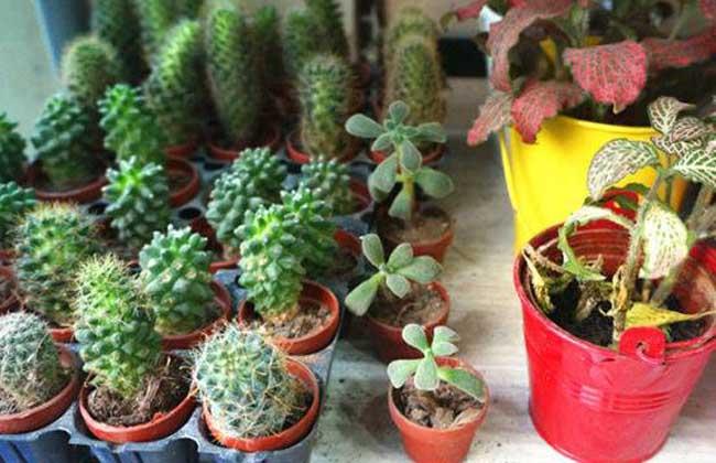 DIY植物宠物店