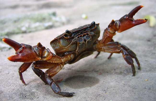 螃蟹有几条腿