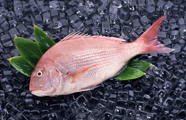 鲷鱼种类图片大全