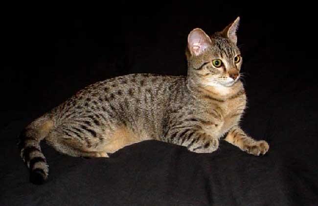 埃及猫神贝斯特图片