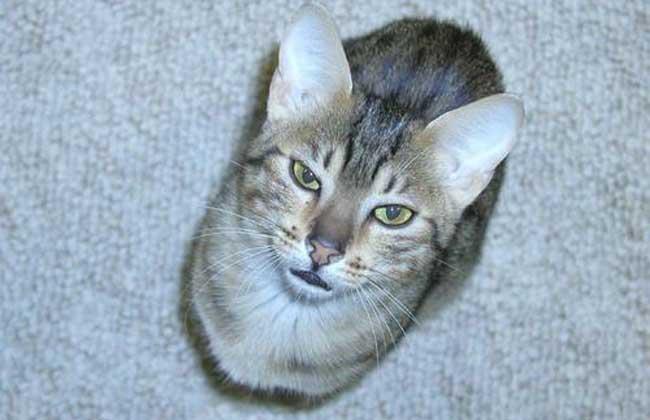 埃及猫神雕像图片