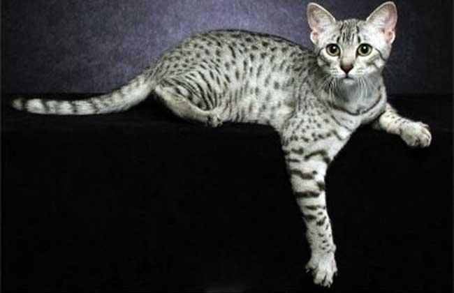 埃及猫的神话传说图片