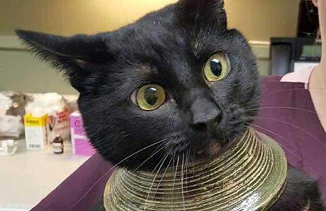 埃及猫多少钱一只图片