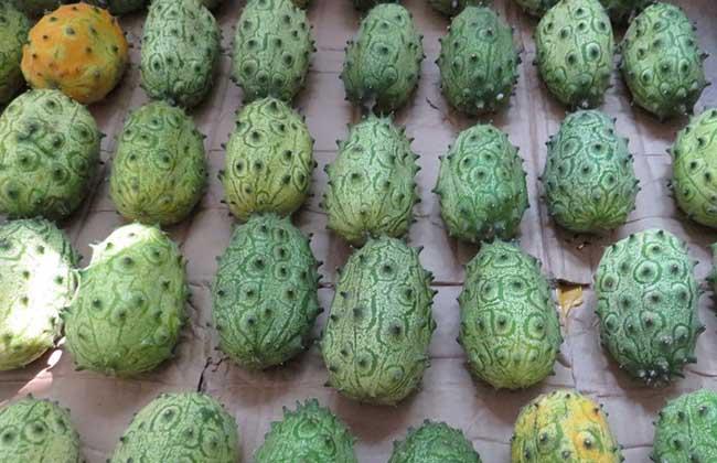 刺角瓜栽培技术