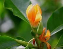 佛教五树六花是哪些?