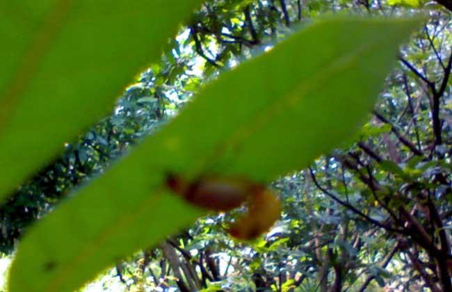 树虱怎么防治