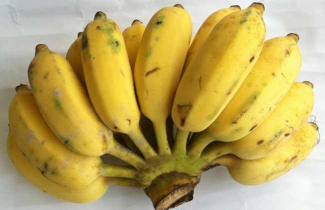孕妇能吃芭蕉吗
