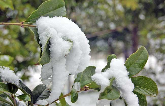 六月飞雪是怎样形成的?