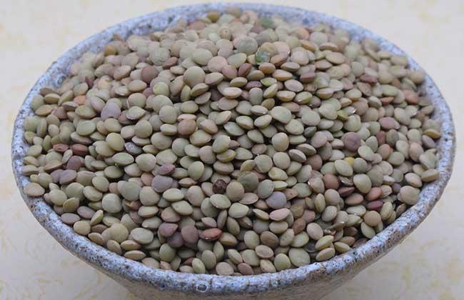 小扁豆的功效与作用
