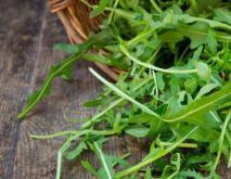 芝麻菜种植技术视频