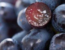 黑提葡萄种植技术视频