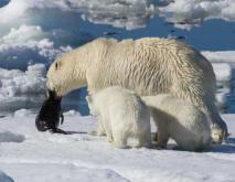 南极有北极熊吗?