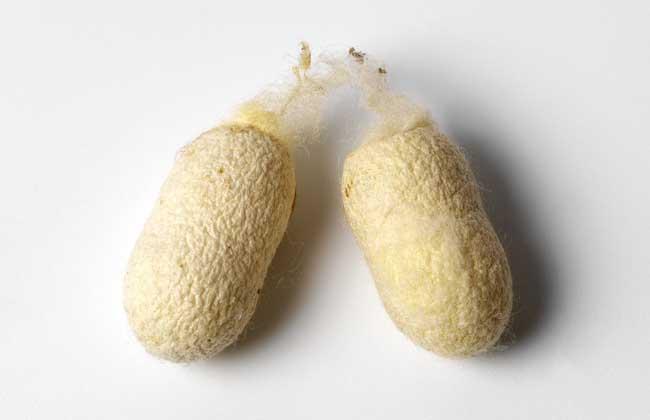 蚕茧多少钱一斤