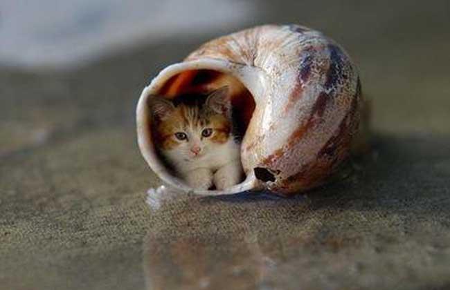 茶杯猫多少钱一只