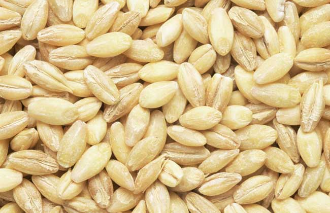 农产品期货是什么意思?