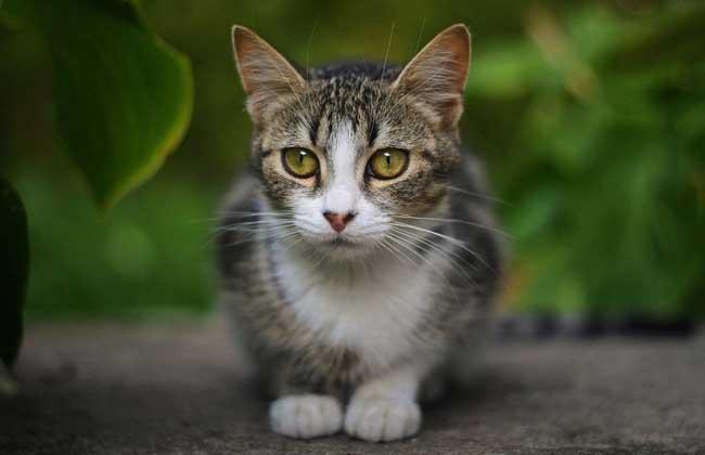 宠物猫的名字大全