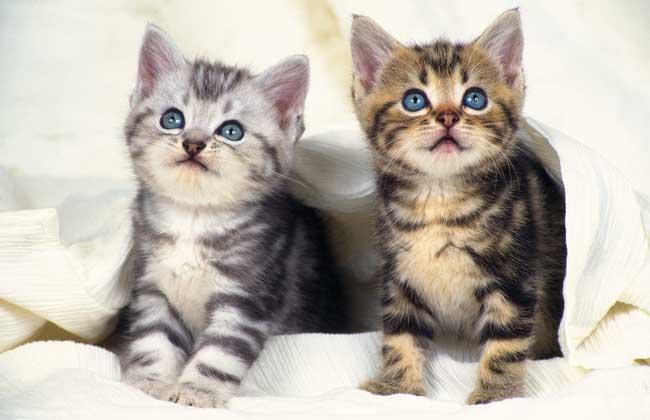 猫咪起名有什么方法? 1、猫咪的名字除了可爱按照猫咪的长相和花色来起名字,例如猫是白色的,可以叫雪儿、酸奶等,例如长稍微胖些,可以叫小胖仙什么的,瘦的叫西西。 2、猫咪也可以按习性特征,爱玩的叫小淘气、呆呆等。 3、两种合在一起起,例如毛色为花色、老爱咪咪的叫可以叫花咪。 4、猫咪还可以按照主人的喜好来给猫咪命名,桃酥、麻花、香蕉、肉包、包包、肉肉、丸子、肉丸、咖啡、摩卡、奶糖、糖糖、巧克力等。