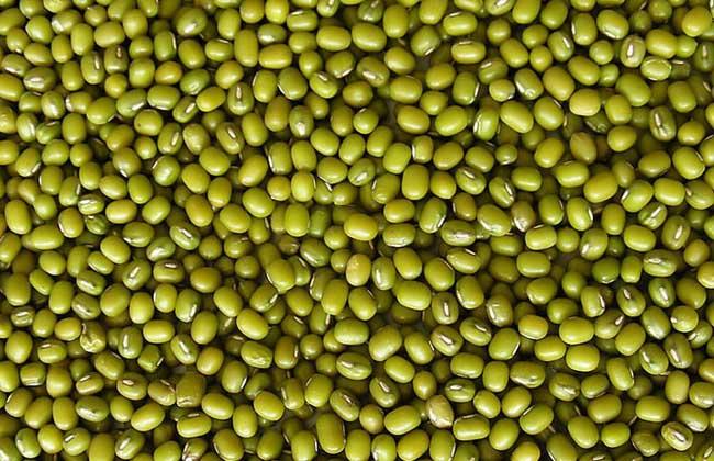 绿豆的营养价值