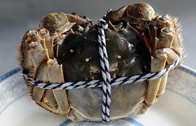 阳澄湖大闸蟹多少钱一斤