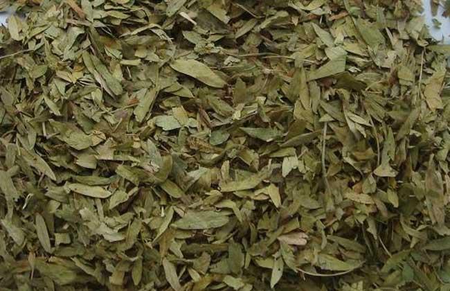 番泻叶的副作用