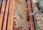 蜂胶价格多少钱一斤?