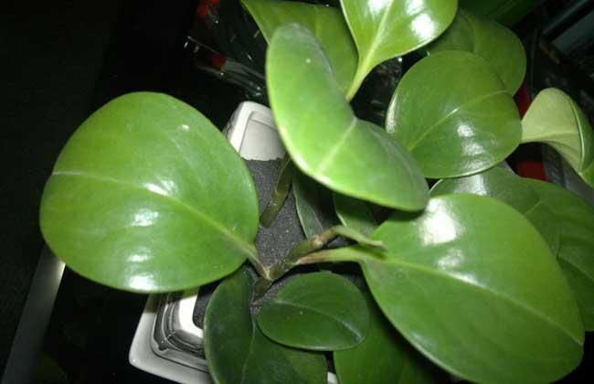 十大防辐射植物排行榜