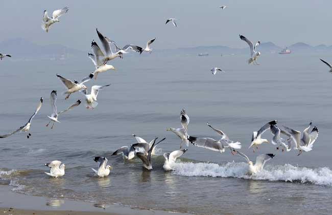 海鸥吃什么食物