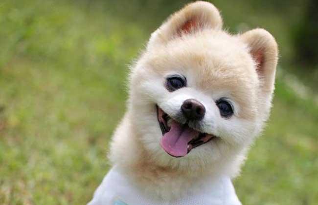 俊介犬多少钱一只