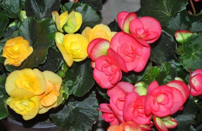 """甘肃兰州:花卉市场受热捧 养花更是""""养心情"""""""
