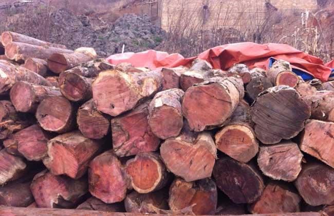 红豆杉木材多少钱
