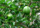 铁西瓜是什么东西?